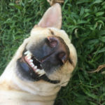 Dream about a dog with no teeth meaning