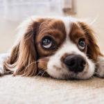 Dream about losing your dog (Dog going missing)
