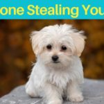 Dream of Someone Stealing Your Dog Meaning
