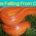 Snakes Falling From the Ceiling Dream Meaning